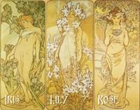 Iris Lily Rose Fine Art Print