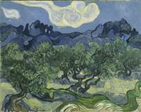 Olive Trees Fine Art Print