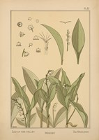 Plate 37 - Lily of the Valley by Vintage Apple Collection - various sizes