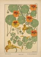 Plate 40 - Nasturtium by Vintage Apple Collection - various sizes