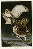 Barn Owl by Vintage Apple Collection - various sizes