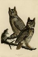 Great Horned Owl by John James Audubon - various sizes