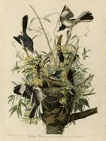 Mocking Bird Fine Art Print