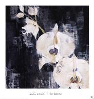 Shadow Orchids I Fine Art Print