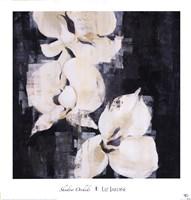 Shadow Orchids II Fine Art Print