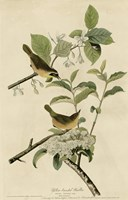 Yellowbreasted Warbler Fine Art Print