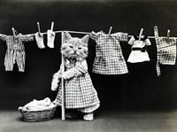 Kitty Laundry Fine Art Print