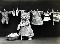 Kitty Laundry Fine Art Print