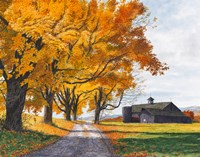 Golden Maples Fine Art Print
