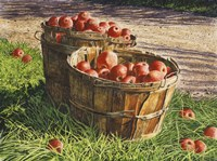 Apple Bushels Fine Art Print