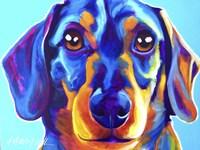Dachshund Oscar Fine Art Print
