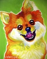 Pomeranian Tiger Fine Art Print