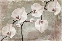 Orchids by Mindy Sommers - various sizes