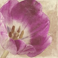 Buttercream Tulip 1I by Mindy Sommers - various sizes