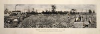 Picking Cotton in GA 1915 by Mindy Sommers - various sizes