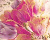 Tulip Glow by Mindy Sommers - various sizes