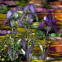 Sunset Irises Fine Art Print