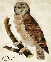 Brown Owl by Mindy Sommers - various sizes