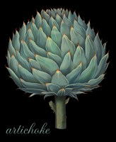 Artichoke by Mindy Sommers - various sizes