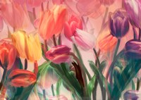 Tulip Flamenco by Mindy Sommers - various sizes
