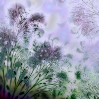 Lavender Day by Mindy Sommers - various sizes