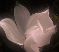 Magnolia by Mindy Sommers - various sizes
