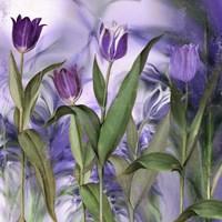 Purple Dream II Framed Print