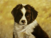 Border Collie Pup 1 by John Silver - various sizes
