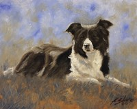 Collie Resting Fine Art Print
