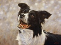 Border Collie 1 by John Silver - various sizes