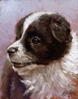 Border Collie 1 by John Silver - various sizes, FulcrumGallery.com brand