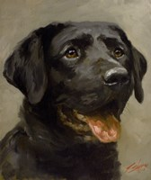 Black Lab 8 Fine Art Print