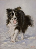 Border Collie 2 by John Silver - various sizes