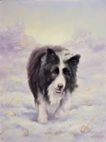 Border Collie 6 by John Silver - various sizes
