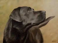 Black Lab 13 Fine Art Print