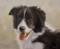 Border Collie 11 Fine Art Print