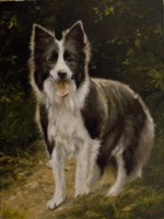 Border Collie 14 by John Silver - various sizes