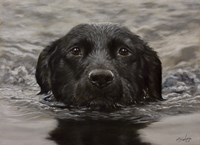 Black Lab 20 Fine Art Print