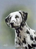Dalmatian 1 Fine Art Print
