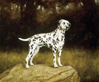 Dalmatian 2 Fine Art Print