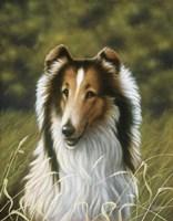Lassie Fine Art Print