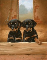 Adorable by John Silver - various sizes
