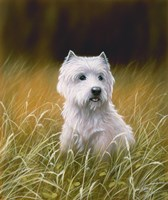 Westie 4 by John Silver - various sizes