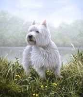 Westie 5 by John Silver - various sizes
