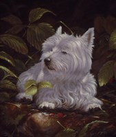 Westie 6 by John Silver - various sizes