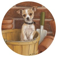 Chihuahua In Basket by John Silver - various sizes