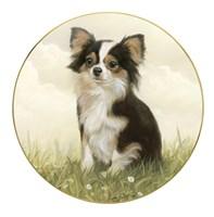 Chihuahua in Field Fine Art Print