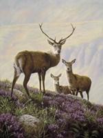 Deer by John Silver - various sizes