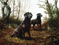 Country Companions 1 by John Silver - various sizes