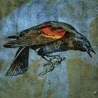 Redwing Blackbird Framed Print